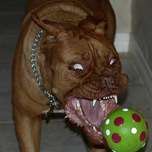 demented dogs - photo #26