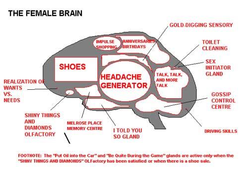 brain diagram joke library of wiring diagram u2022 rh jessascott co